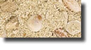 Bilde av CaribSea Aragamax Grand Bahama Biome  - 13,6 kg