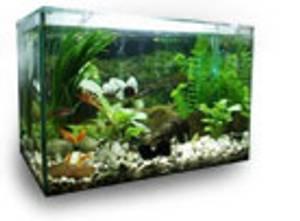Bilde av Akvarie på mål