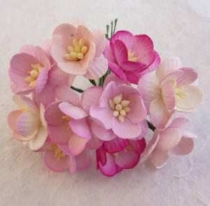Bilde av Flowers - Cherry Blossom - Saa-244 - Mixed Pink - 50stk