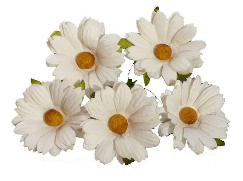 Flowers - Chrysanthemums - SAA-266 - Ivory - 50stk