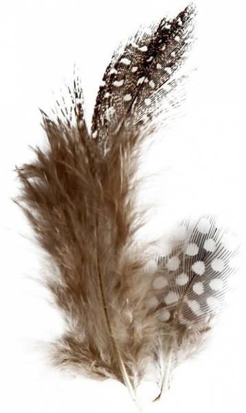 Fjær - Perlehøns fjær / dun - brun natur - 3g
