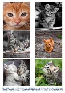 Bilde av Barto Design - Klippeark A4 - 069030 - Kittens