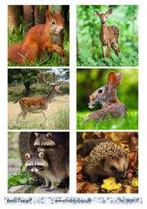 Bilde av Barto Design - Klippeark A4 - 069031 - Forest Animals