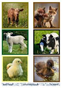 Bilde av Barto Design - Klippeark A4 - 069045 - Animals