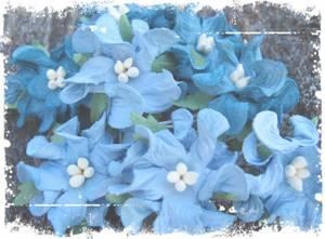 Bilde av Papirdesign - Gardenia, små - Petrol og blå