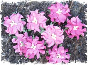 Bilde av Papirdesign - Gardenia, små - Rosa
