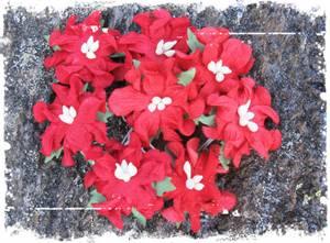 Bilde av Papirdesign - Gardenia, små - Rød
