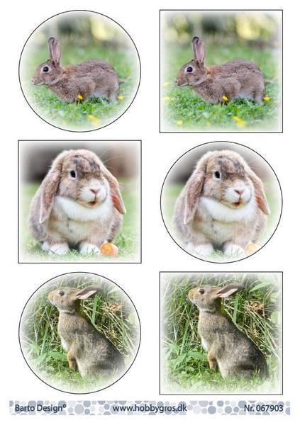 Barto Design - Klippeark A4 - 067903 - Bunnies
