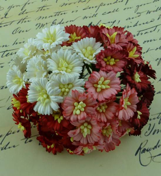 Flowers - Cosmo Daisy Flowers - SAA-251 - Mixed Red/White - 50st