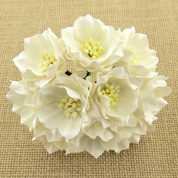 Flowers - Lotus - SAA-314 - White - 25stk