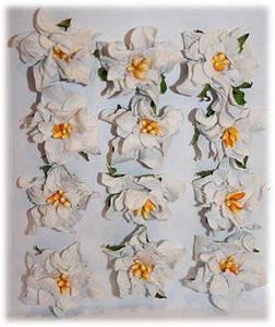 Bilde av Reprint - Paper Flowers - Gardenia - Grey