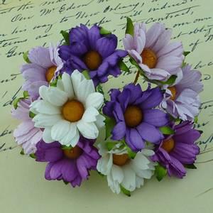 Bilde av Flowers - Chrysanthemums - SAA-269 - Mixed Purple/Lilac/White -5