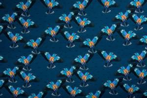 Bilde av Jersey Blue birds