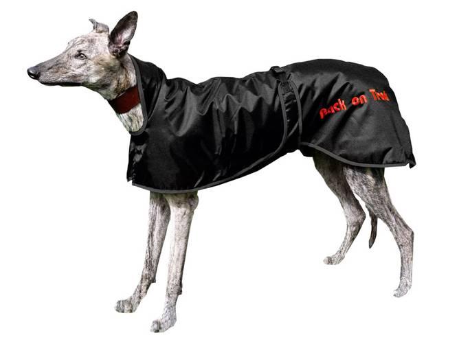 Bilde av Back on Track Greyhound