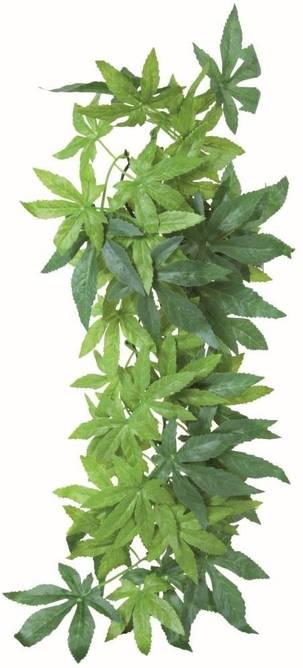 Bilde av Silky Hanging Abutilon Plant