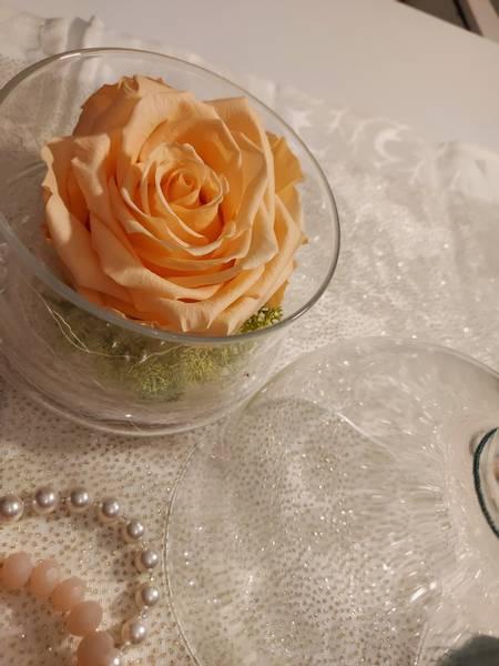 Bevart rose i glasskrukke Orasje