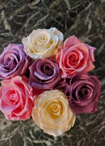 Bilde av Preserverte roser Lillac & white & pink