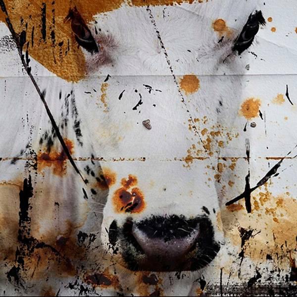 Bilde av Cow 20 x 20 cm Nr 12