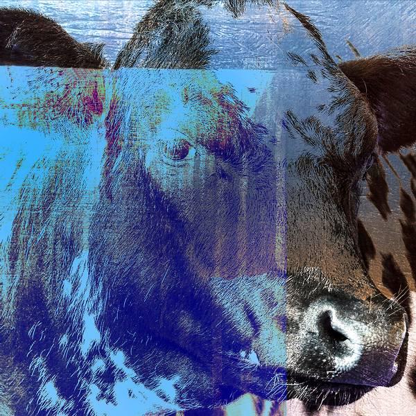 Bilde av Cow 20 x 20 cm Nr 13