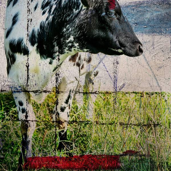 Bilde av Cow 20 x 20 cm Nr 28