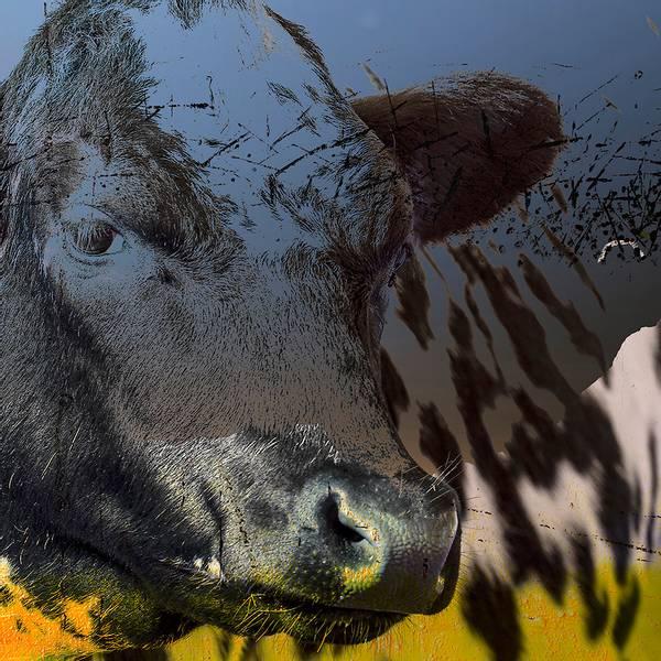 Bilde av Cow 20 x 20 cm Nr 34
