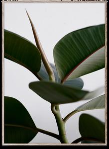 Bilde av Green Home 02 50x70 cm