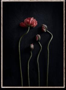 Bilde av Still Life 02 50x70 cm