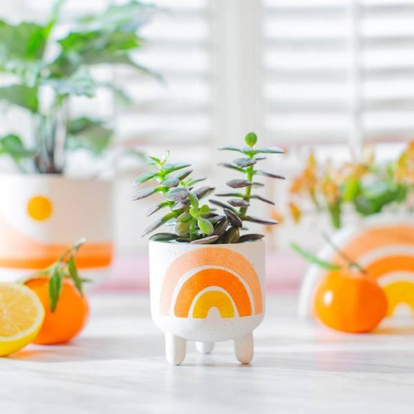 Bilde av Mini Blomsterpotte - Regnbue