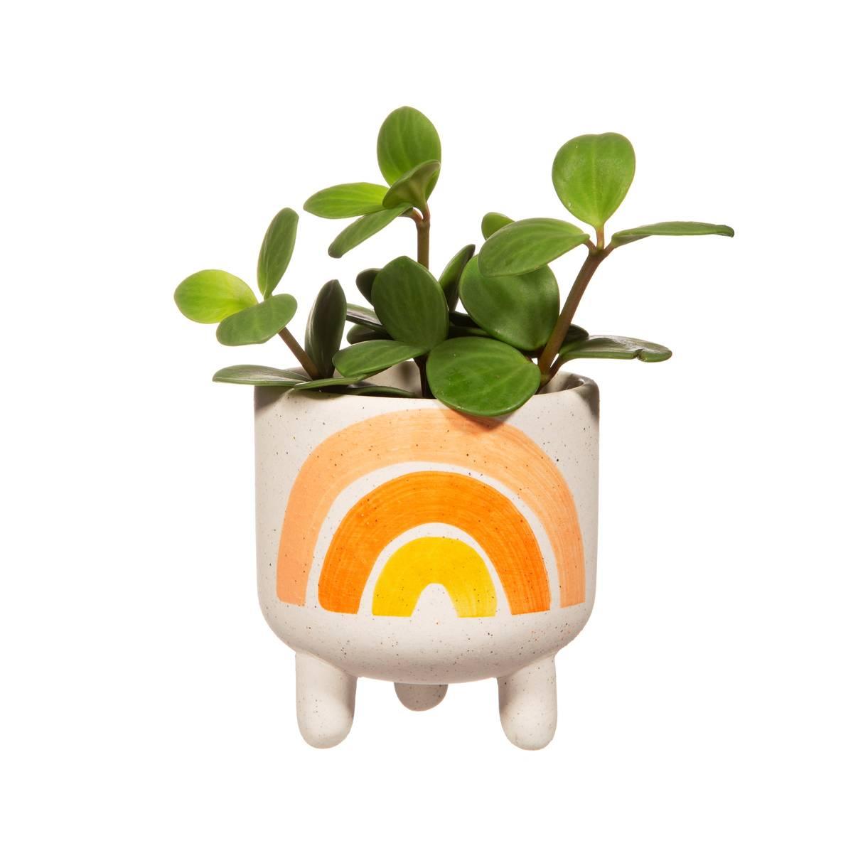 Mini Blomsterpotte - Regnbue