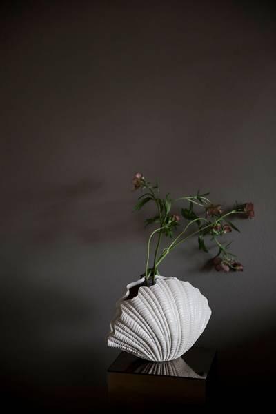 Bilde av Vase Shell