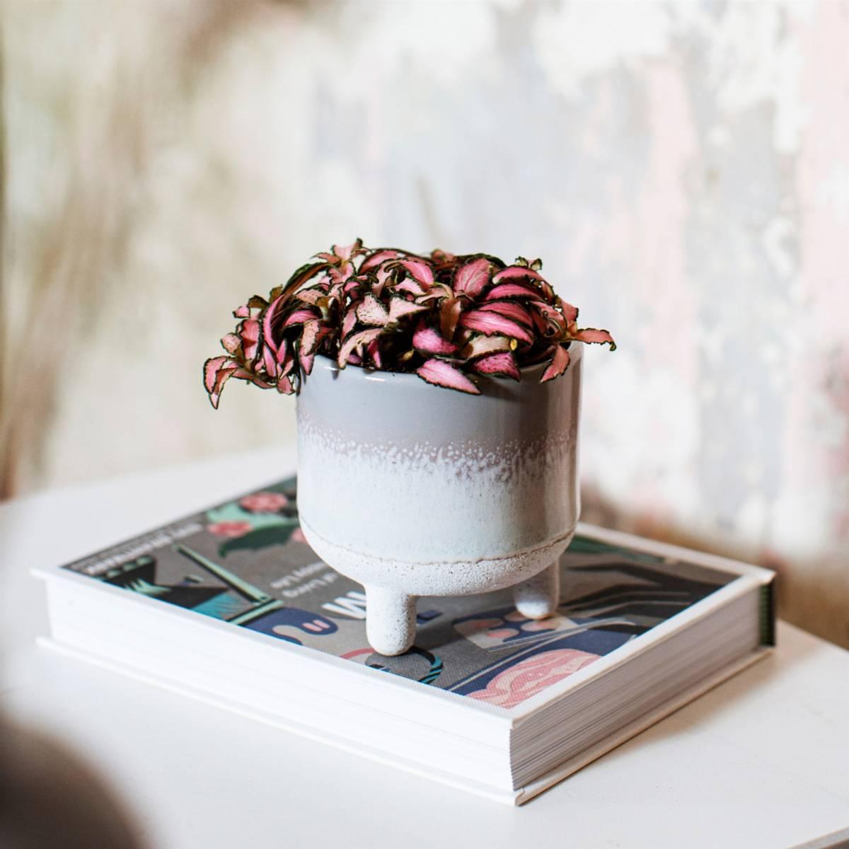 Mojave Grå Blomsterkrukke