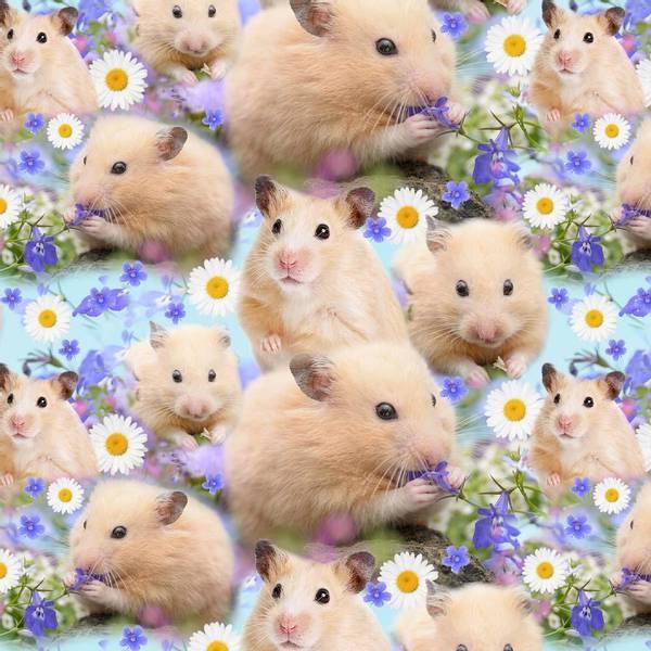 Bilde av Hamster - Bobo