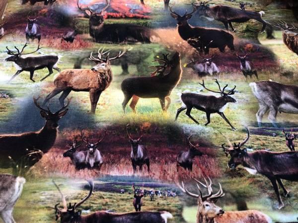 Bilde av Hjort og Reinsdyr i naturen