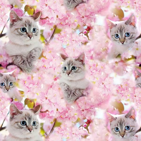 Bilde av Katt Og Kiresbærsblomster