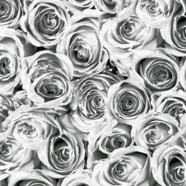 Bilde av Rose garden kontaktplast
