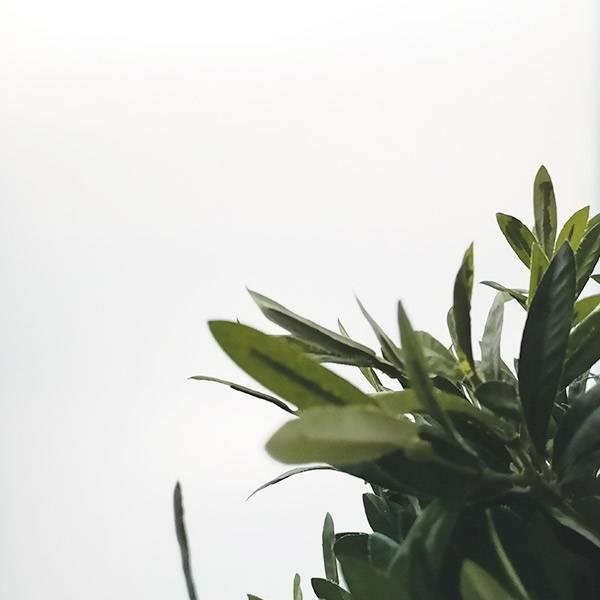 Bilde av Hvit matt vindusfolie