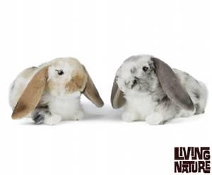 Bilde av Living nature Dutch lop ear