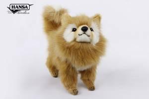 Bilde av Hansatoy hund, pomeranian