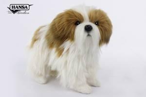 Bilde av Hansatoy hund, Shi tzu