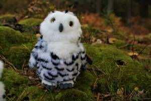 Bilde av Living nature  Snowy Owl with Turning Head