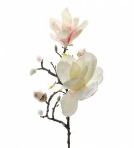 Bilde av Magnolia Gren, Rosa 60 cm -