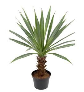 Bilde av Agave 40 cm - Mr Plant