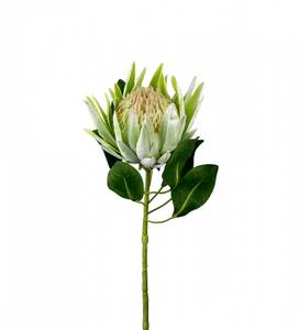 Bilde av Protea H:70 cm - Mr Plant
