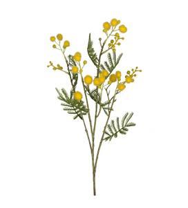 Bilde av Mimosa 60 cm - Mr Plant