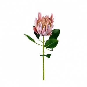 Bilde av Protea H:70 Rosa - Mr Plant