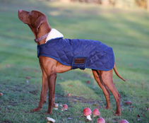 Kentucky Dog Rug