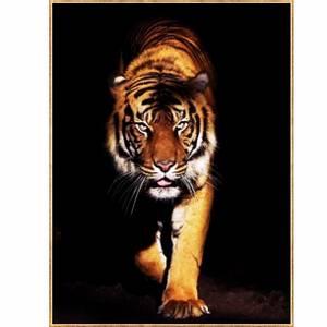 Bilde av BC bilde tiger i gullramme 60x80 temperert glass