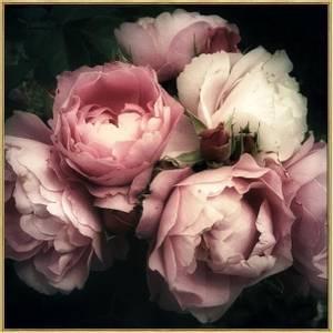 Bilde av BC bilde rosa roser gullramme 80x80 temperert