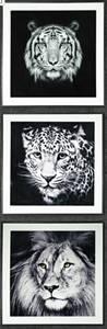 Bilde av Bilde Leopard