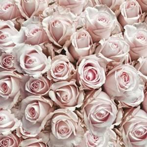 Bilde av Servietter Pastel Roses